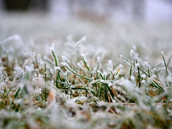 Морозы отступят: в Тверскую область вернутся дожди