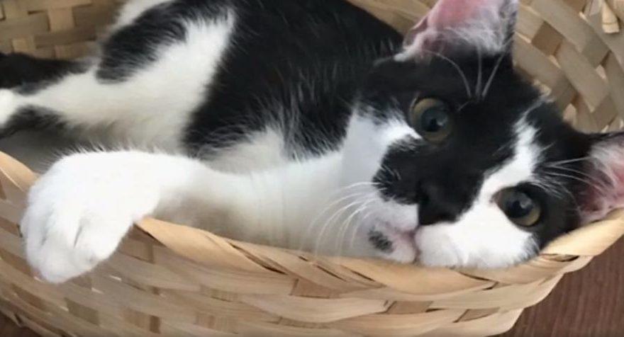 Трехлапая кошка из Болгарии обрела дом в Твери и попала на Первый канал