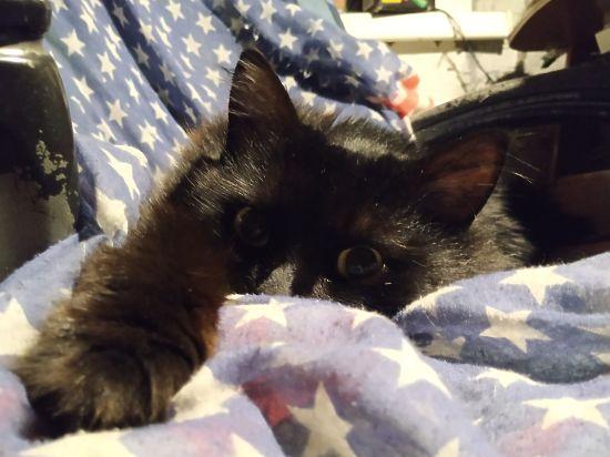 Мягкие и мурчащие: как используют котиков в медицине и интернете