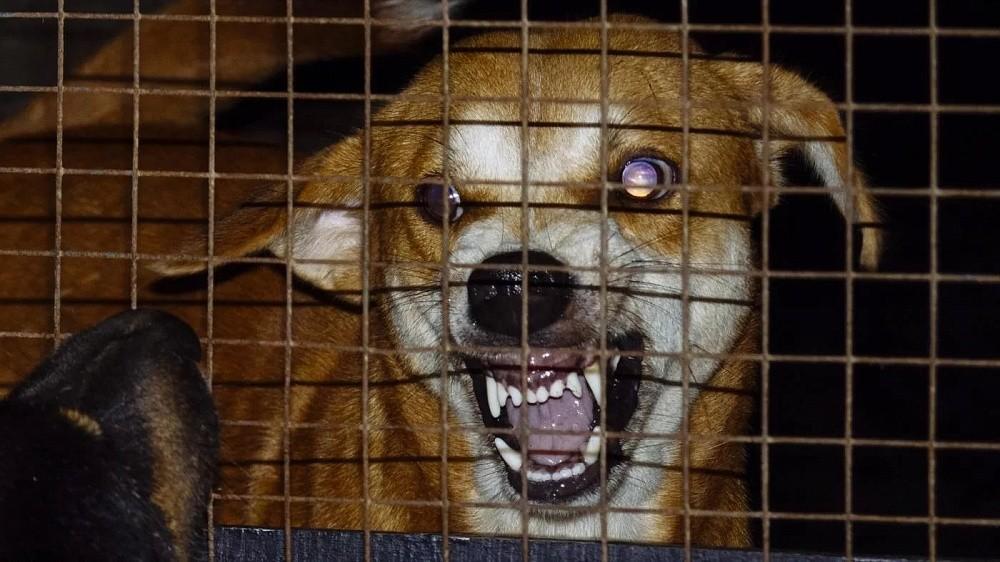В Тверской области домашняя собака заразилась бешенством