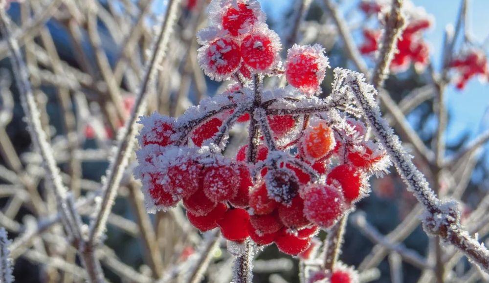 Синоптики в Тверской области прогнозируют всего один морозный день