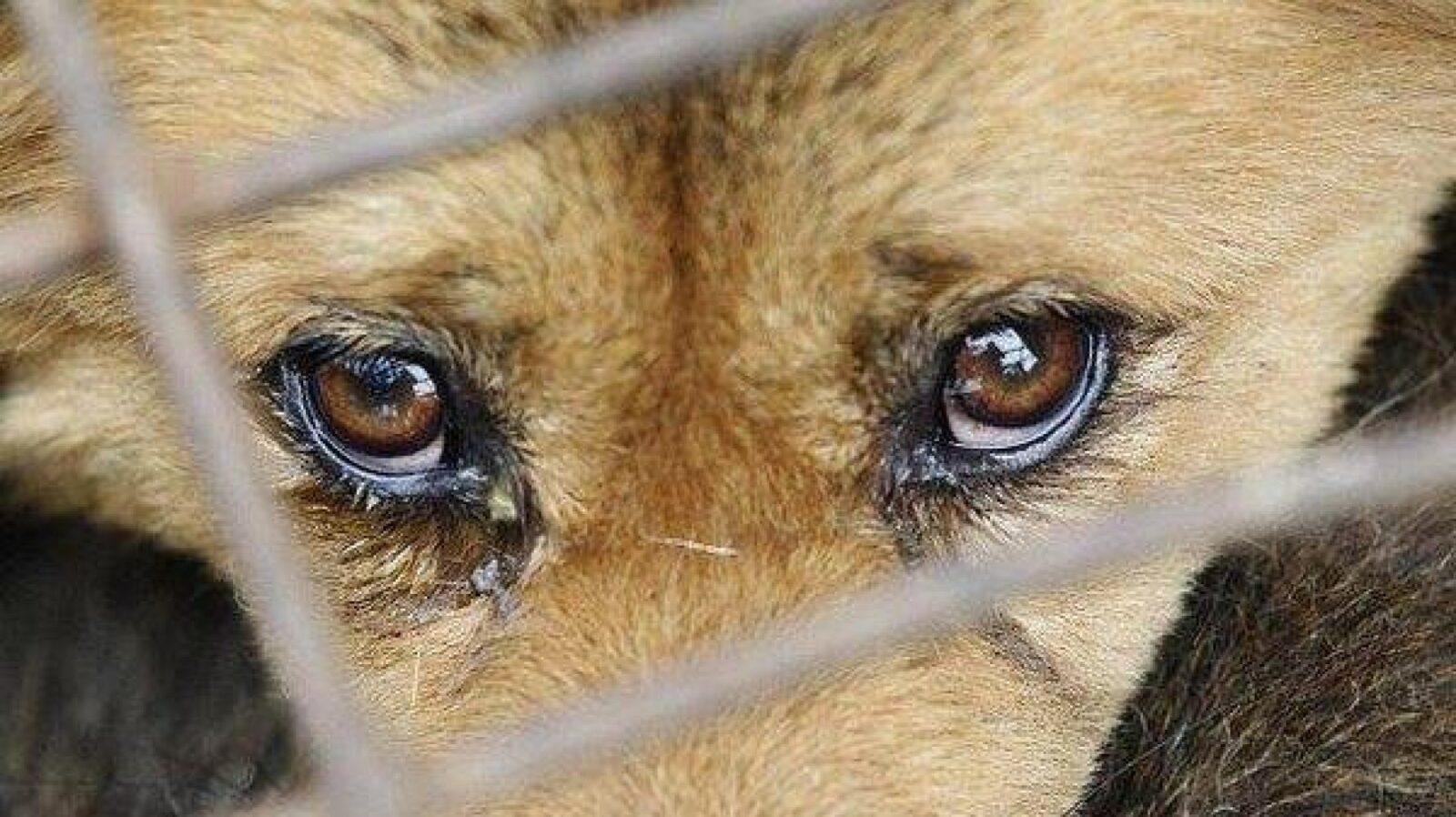 За избиение своей собаки скалкой житель Твери получил три года условно