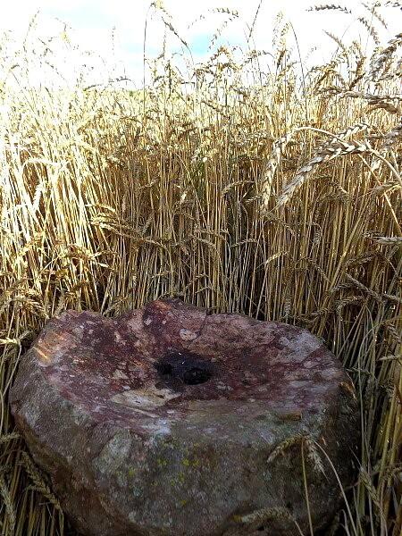 В Тверской области найдена древняя 100-килограммовая каменная чаша