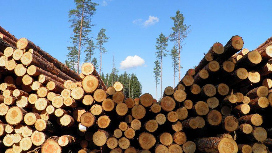 Шесть пилорам Тверской области поплатились за сжигание отходов
