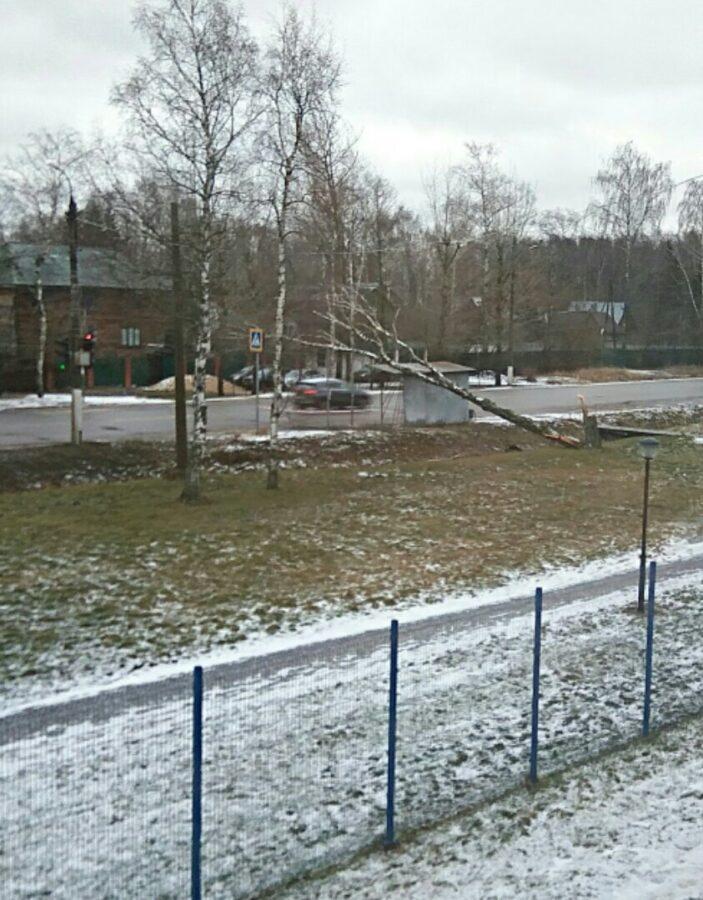 В Твери на Московском шоссе дерево упало на остановку