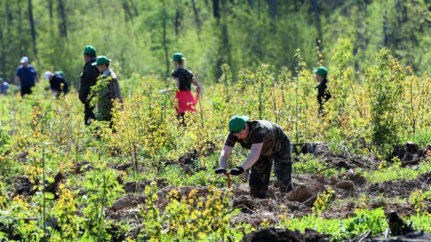 В Тверской области восстанавливают леса