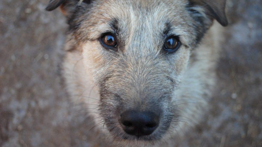 В Твери ищут хозяев собаки, которая чуть не утонула в болоте