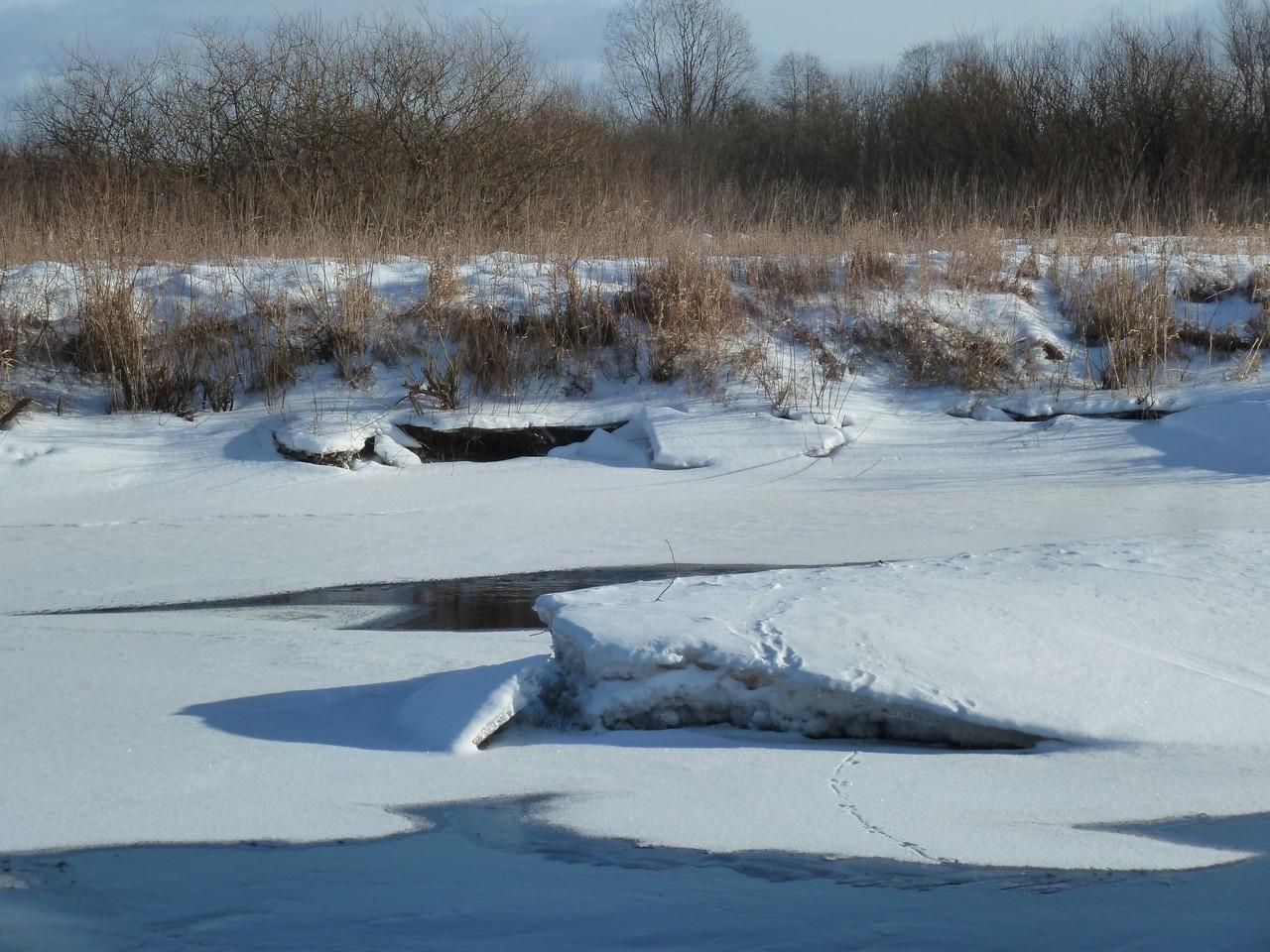 Очевидцы запечатлели в Тверской области бегающую по льду норку
