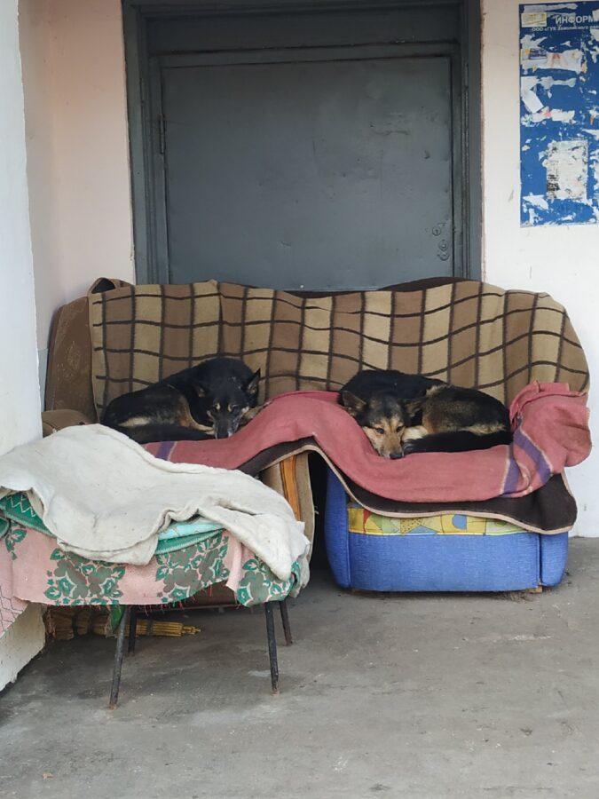 В Твери бездомные собачки спят в креслах на теплых одеялах