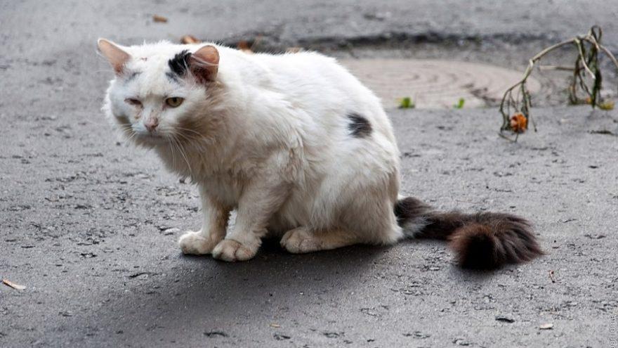 Тверские коты обиделись, что не стали главными героями Дня влюбленных