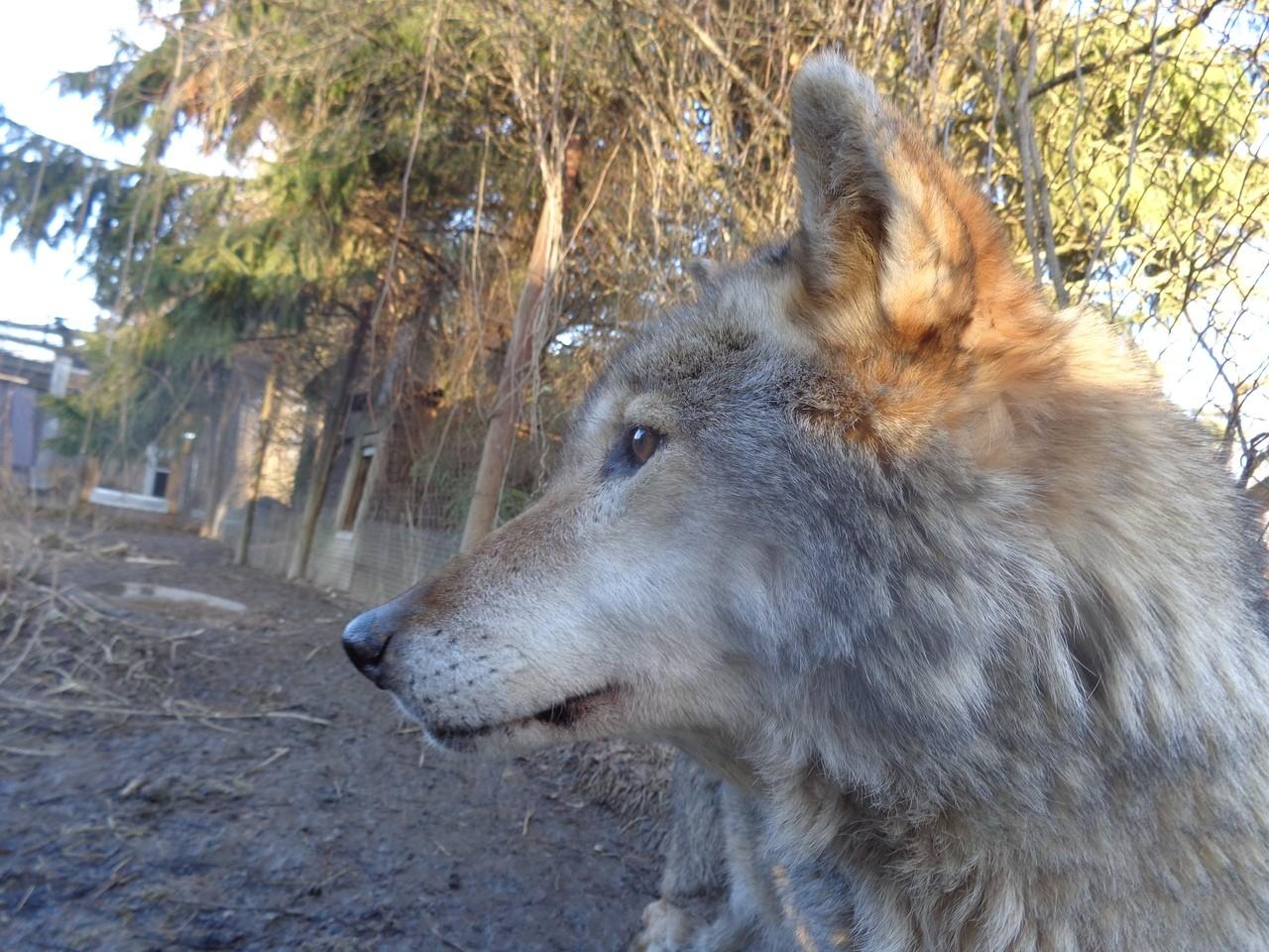 В центре реабилитации животных в Тверской области рассказали о местных долгожителях