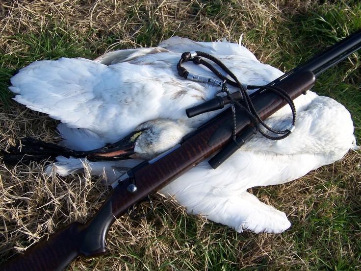 В Тверской области устроили безжалостный расстрел лебедей