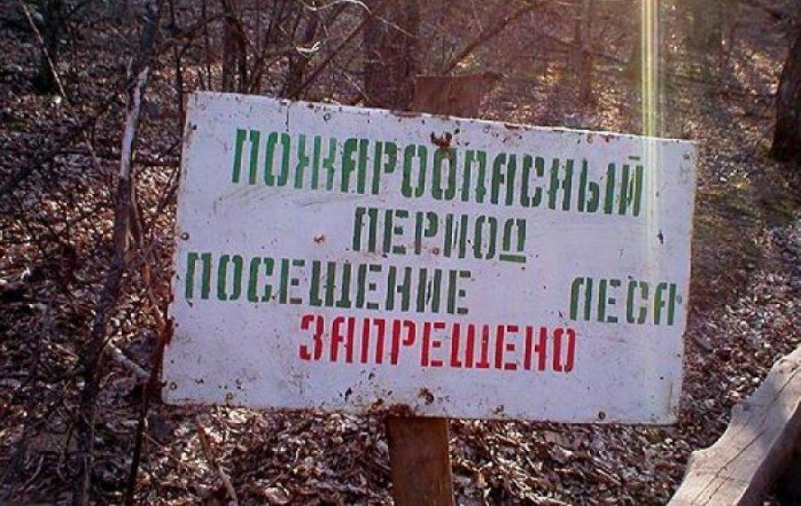 С 1 апреля жителям Тверской области запретят ходить в лес