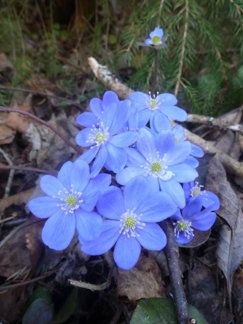 В заповеднике Тверской области раньше срока распускаются цветы и возвращаются птицы