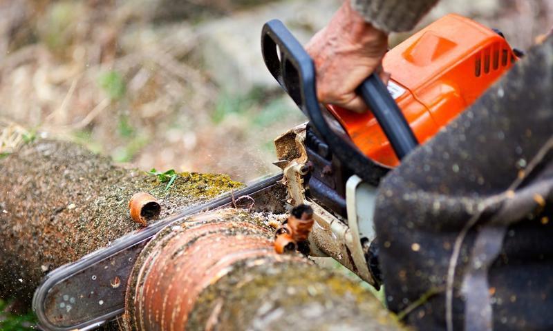 В Тверской области черный лесоруб нарубил деревьев на 6 миллионов