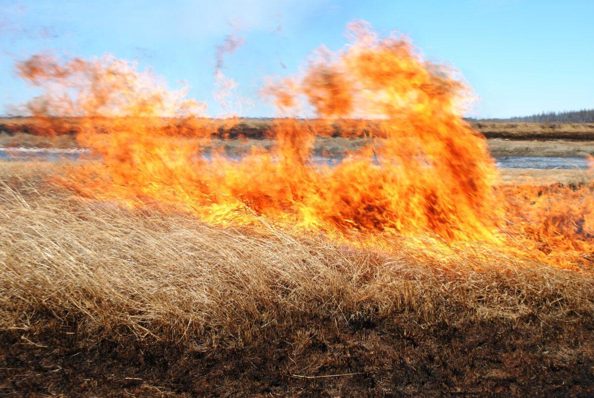 Четыре гектара сухой травы за день потушили спасатели в Тверской области
