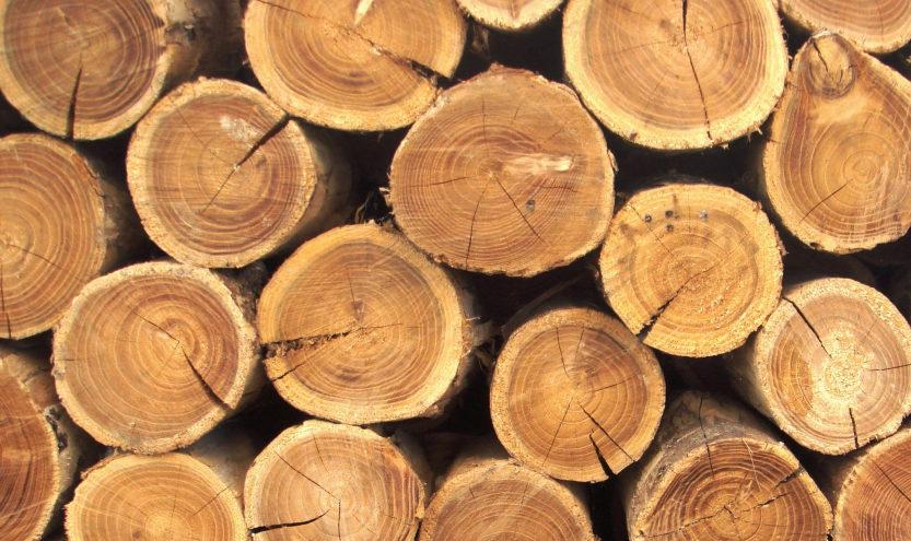 Уникальное деревообрабатывающее оборудование появилось в Тверской области