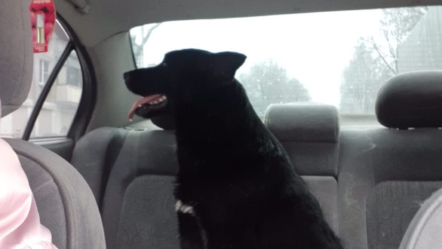 В Твери нашли в канаве жестоко расстрелянную собаку