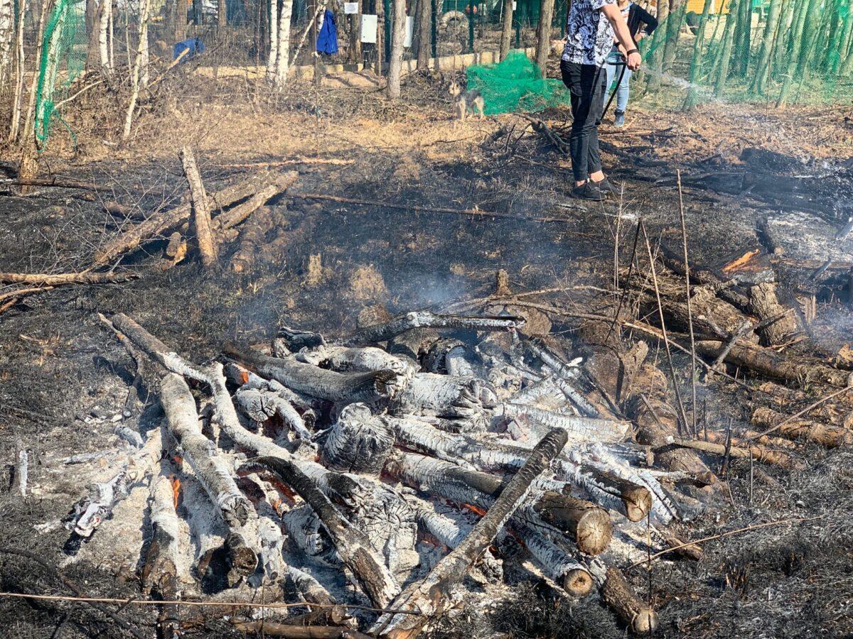 Пожарные спасли тверского медведя Мансура от надвигающегося огня
