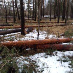 Жители Тверской области боятся потерять грибной бор