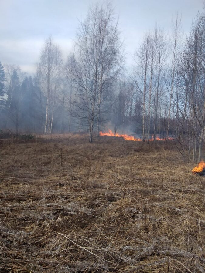 В Тверской области снова горит трава и лес