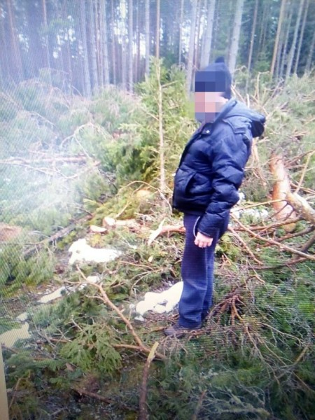 Житель Тверской области спилил 59 деревьев и попался полицейским