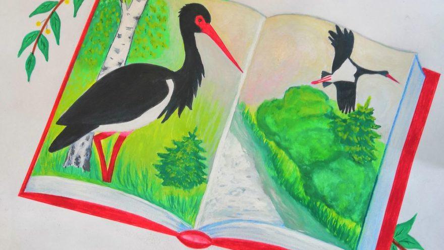 Дети в Тверской области могут нарисовать редкие виды животных и растений