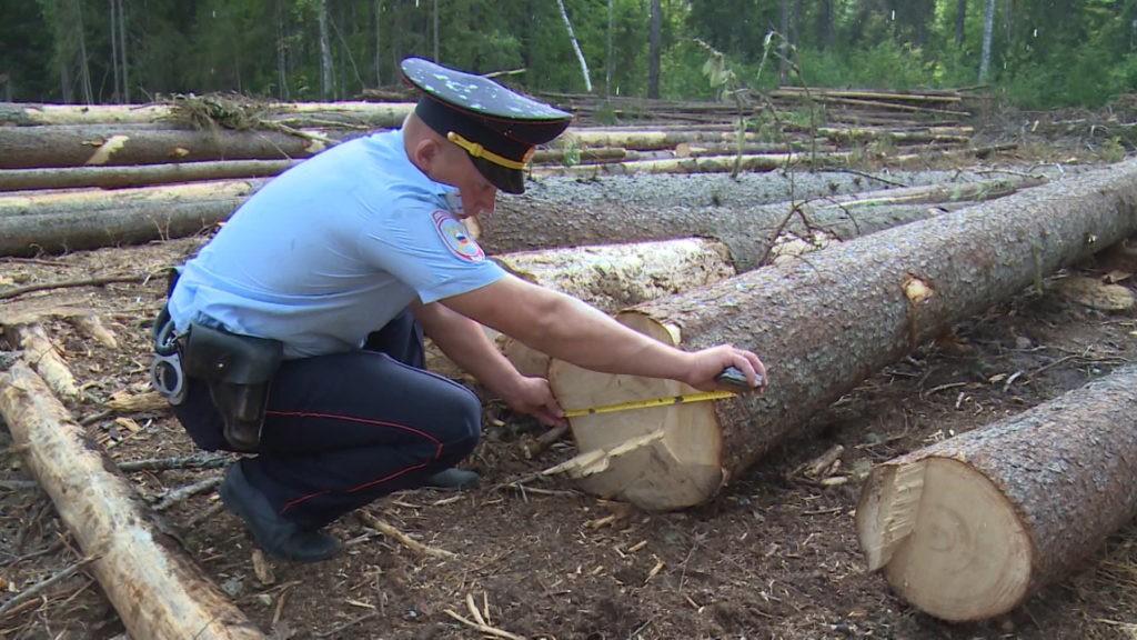 Житель Тверской области незаконно вырубил целый парк