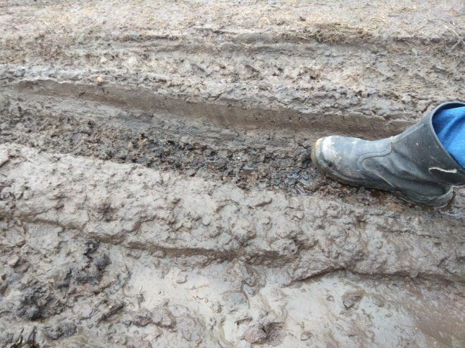 Жители Тверской области возмущены повсеместной грязью