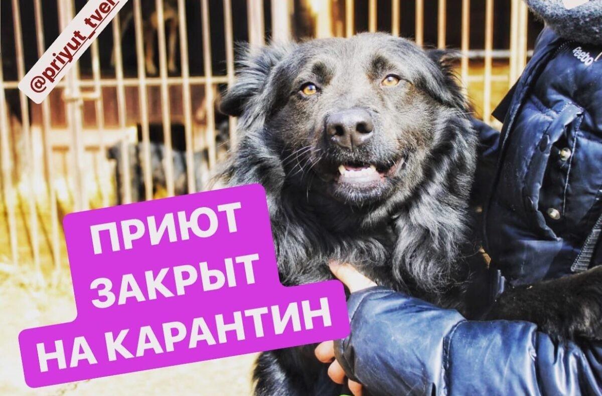 Тверской приют для собак закрылся на карантин