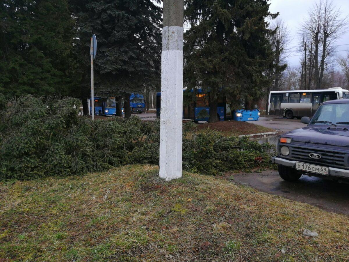 В Твери упавшее дерево чудом не задело автомобиль