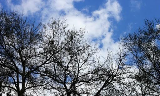 На выходных в Тверской области резко ударят морозы