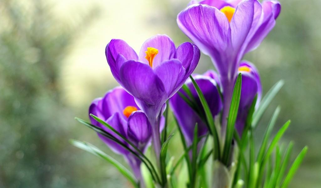 Теперь жители Твери могут не только увидеть, но и послушать цветы