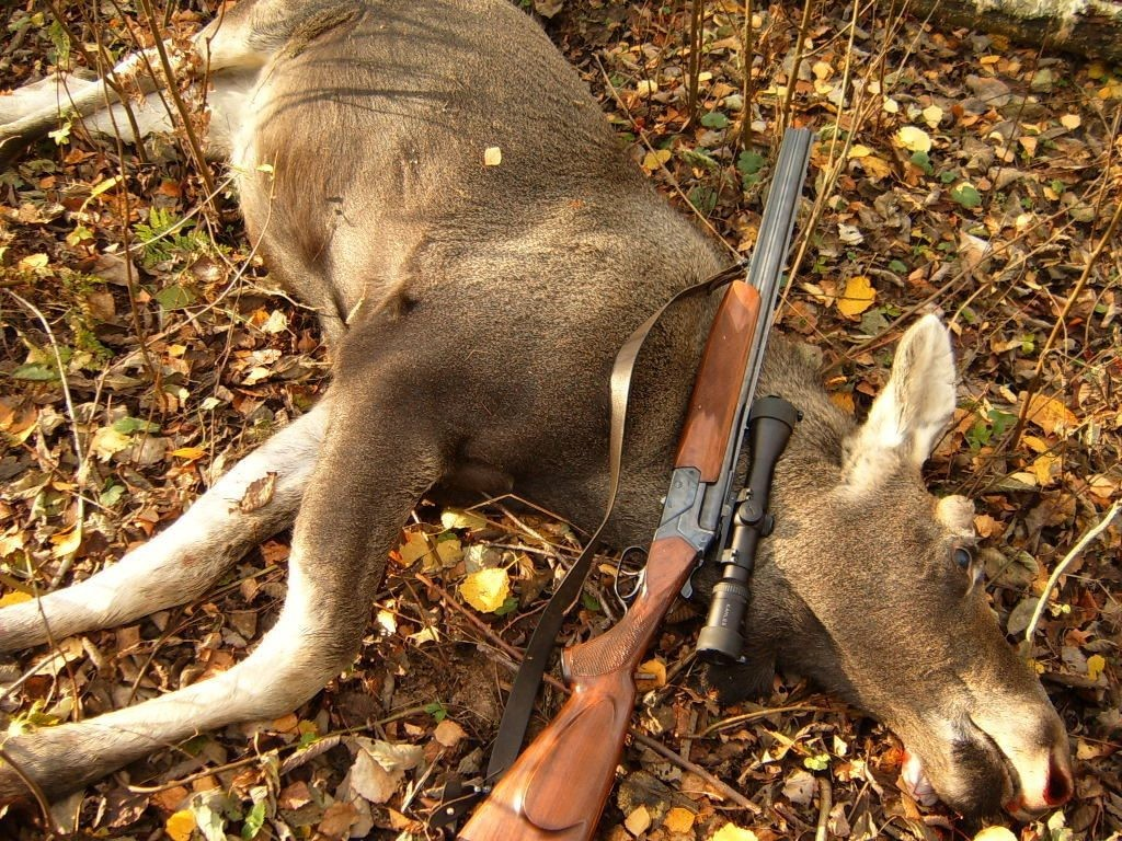 Картинки о браконьерстве