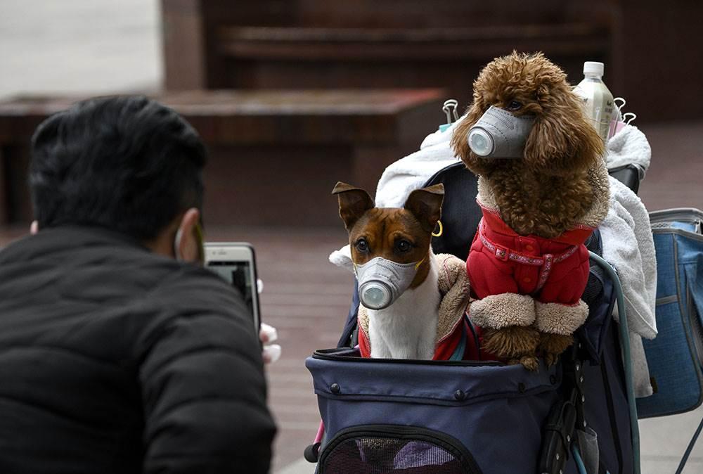Доктор рассказал тверитянам, можно ли заразиться коронавирусом от домашних животных