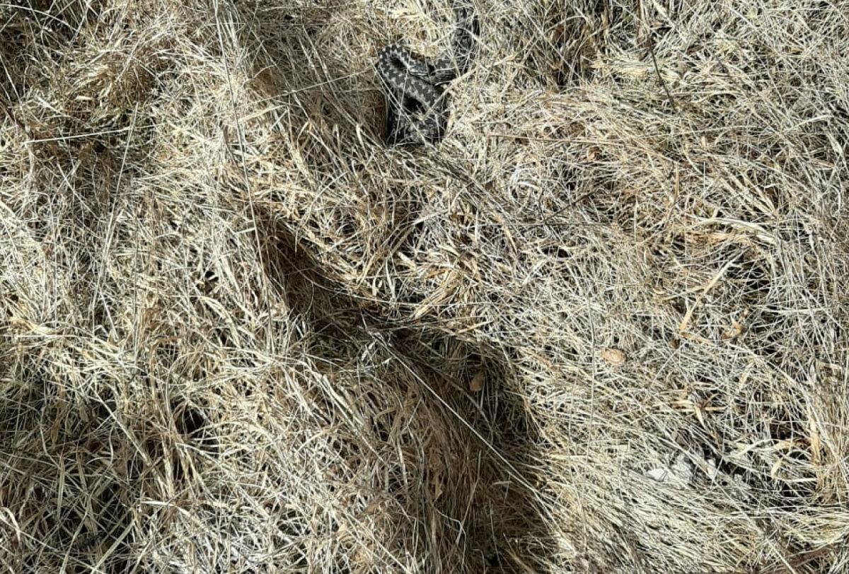 В Тверской области рассказали, что делать при укусе змеи