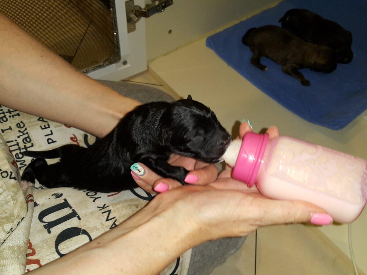 Неизвестные оставили четырех новорожденных щенков в мусорном баке возле тверского храма