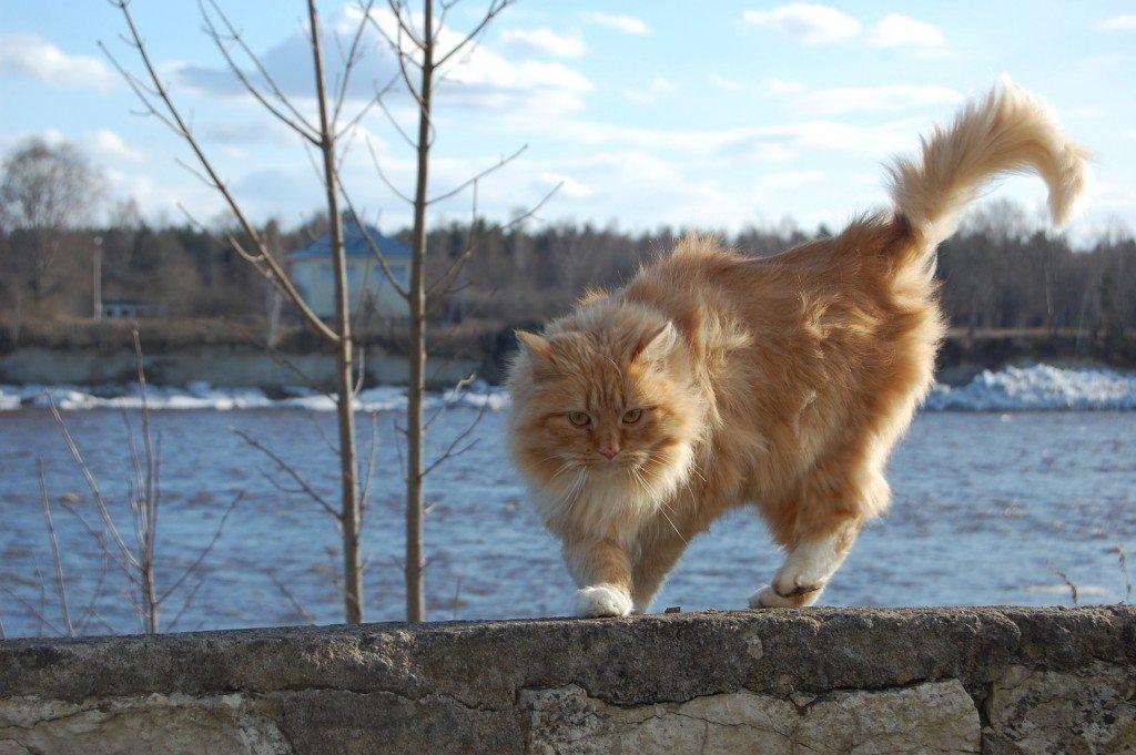 В Тверской области поднимется сильный ветер