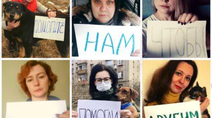Зоозащитники призывают тверитян забрать животных на временную передержку