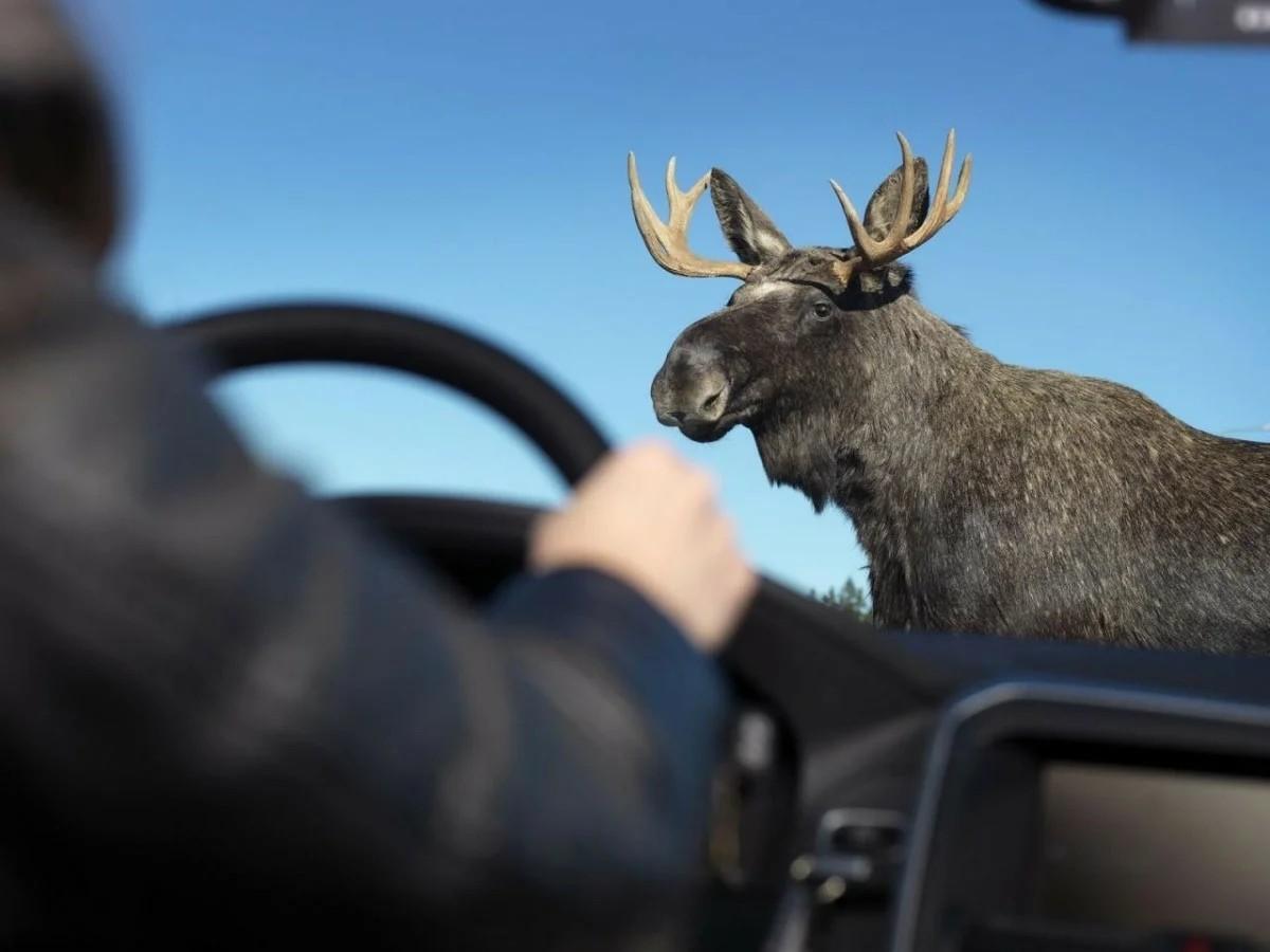 Тверским водителям советуют быть внимательнее, началась сезонная миграция диких животных
