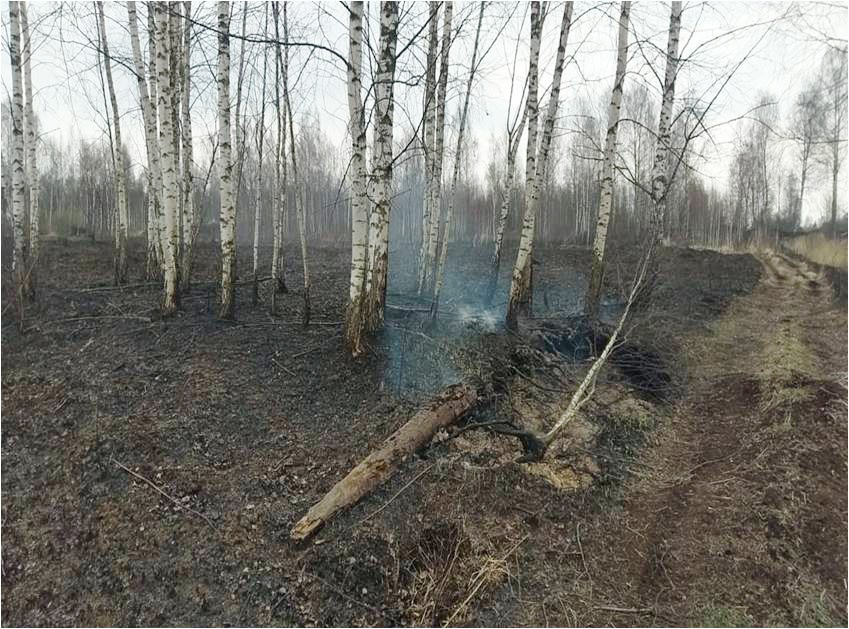 В Тверской области потушили пожар на бывших торфоразработках