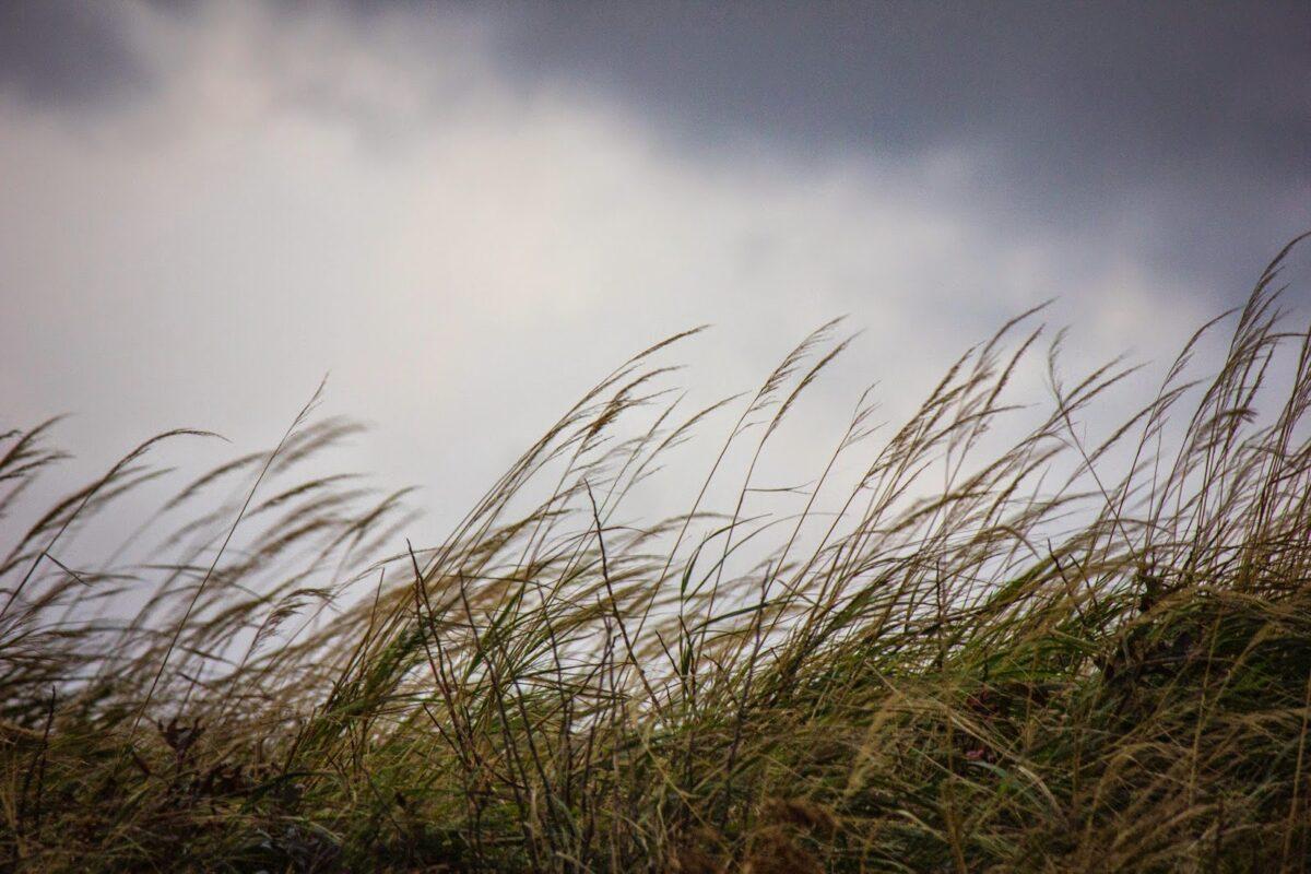 В Тверскую область после штормового ветра придет тепло