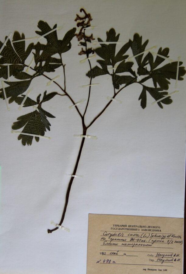 В Тверской области нашли новый вид растений