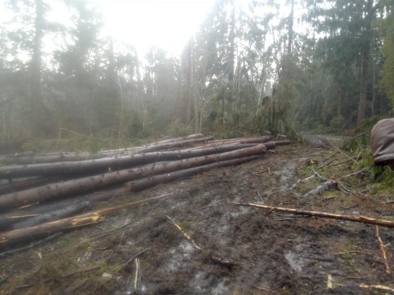 Мужчина нарубил деревьев в Тверской области на 1,5 миллиона