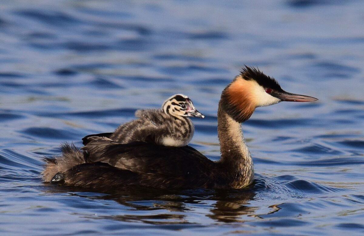 Житель Твери снял на видео редких для наших краев птиц