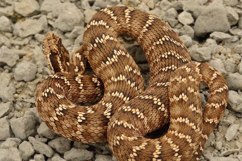 Рыбак повстречал в Тверской области необычную змею