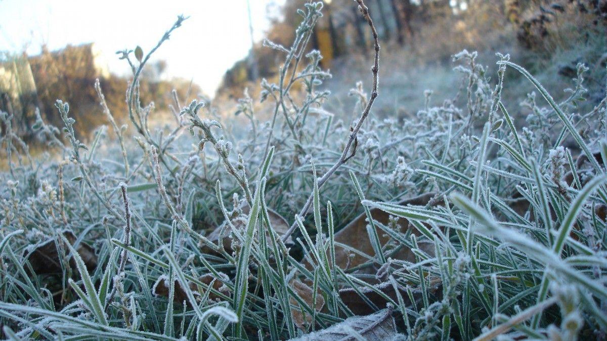 Ночью в Тверскую область придут заморозки
