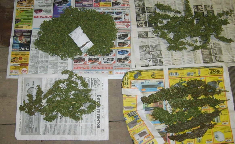 Житель Тверской области прятал на чердаке марихуану