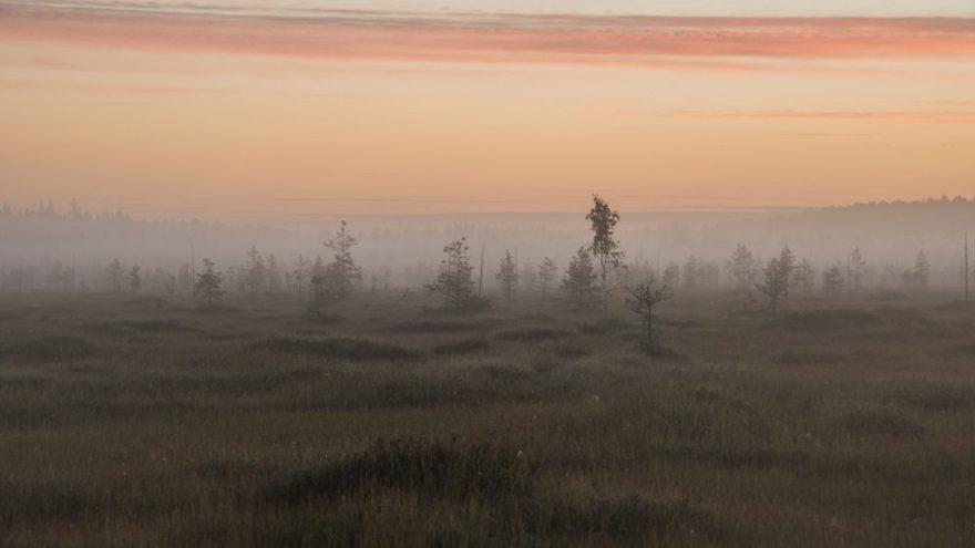 Специалисты заповедника в Тверской области рассказали, как работает местная метеостанция