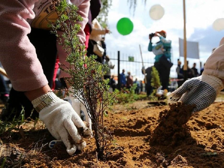 6 миллионов деревьев посадили в Тверской области в память о погибших